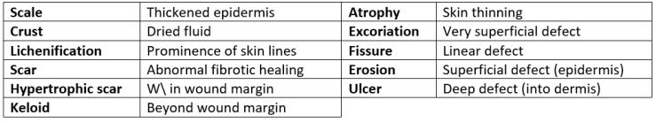 Dermatology 2