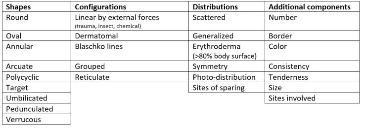 Dermatology 3