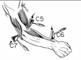 elbow 4