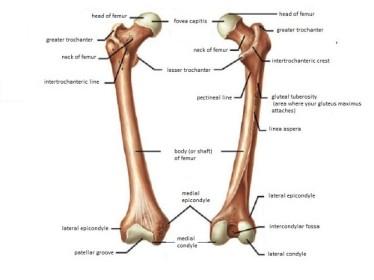Femur fractures 1