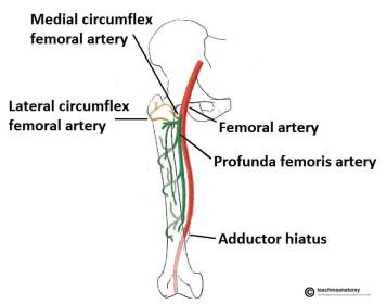 Femur fractures 2